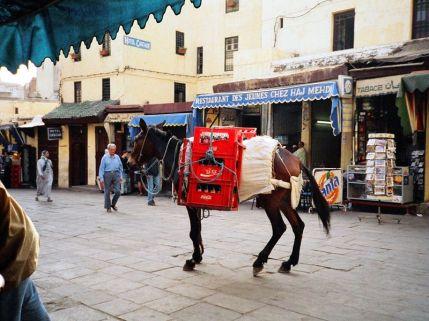 marokko_2001_fes_pferd
